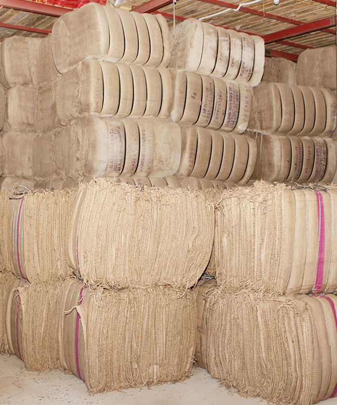 about-jute